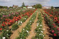 Les Samedis de la Rose Journée technique