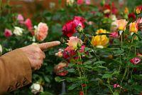 La journée artistique - Les Samedis de la Rose