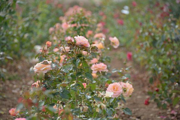 La journée ''Bien-être'' en famille - Les samedis de la rose