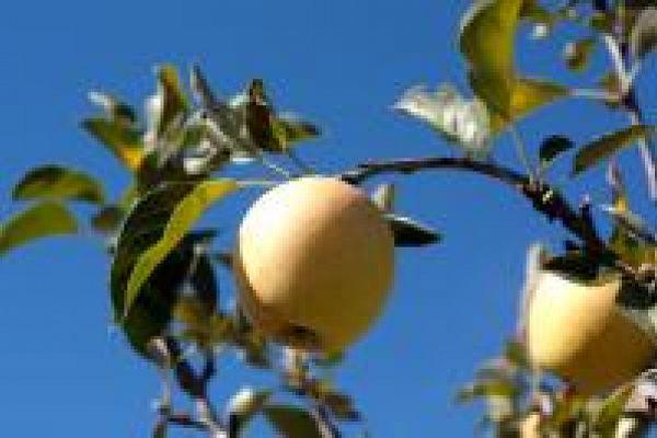 18 et 19 novembre: de l'arbre au fruit