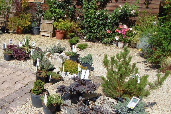 Un jardin de plantes vivaces