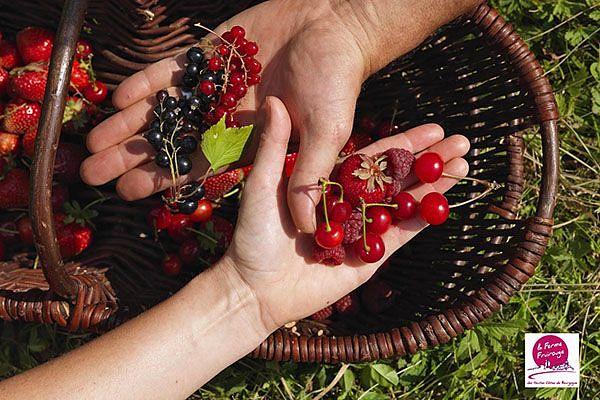 Les arbustes à petits fruits